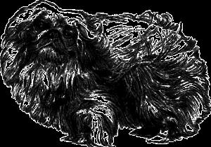 Описание тела пекинеса